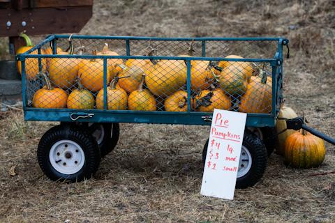Savory Pumpkin Hand Pies